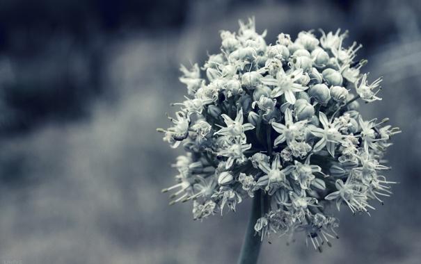 Фото обои белый, цветок, макро, растение