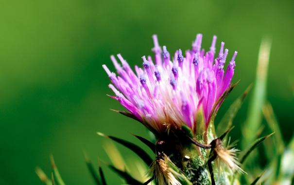 Фото обои цветок, листья, природа, лепестки