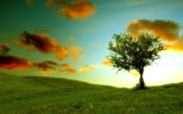 Фото обои небо, облака, пейзаж, природа, холмы, травка, зелень. дерево
