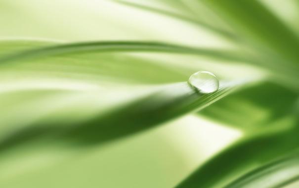Фото обои зелень, природа, фото, фон, green, обои, капля