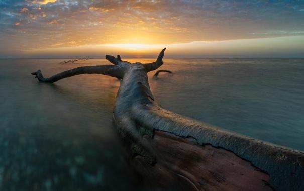 Фото обои природа, озеро, дерево, рассвет