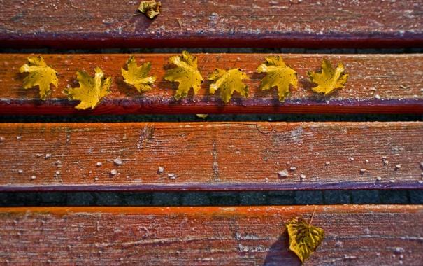 Фото обои осень, листья, макро, настроение, настроения, фотографии, осенние обои