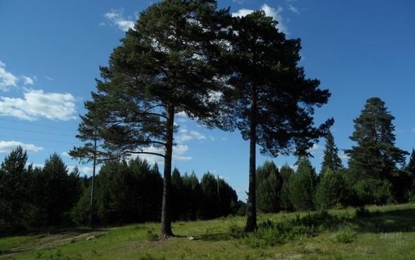 Фото обои лес, лето, деревья