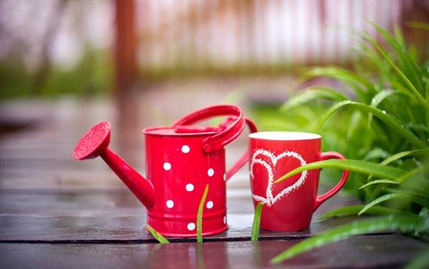 Фото обои капли, дождь, чашки