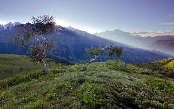Фото обои небо, трава, листья, солнце, облака, лучи, деревья