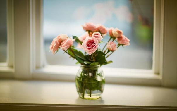 Фото обои банка, розы, подоконник