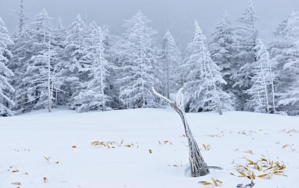 Фото обои зима, деревья, природа