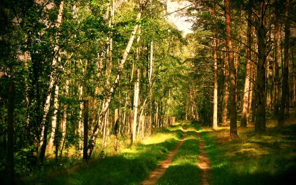 Фото обои дорога, лес, лето, природа