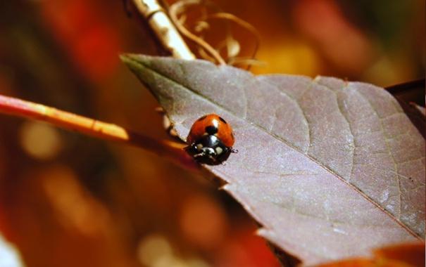 Фото обои насекомое, осень, листва