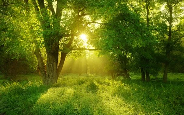 Фото обои лес, трава, деревья, пейзаж, природа, grass, forest