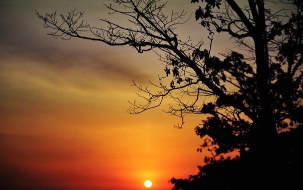 Фото обои небо, солнце, облака, закат, дерево, силуэт