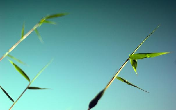 Фото обои зелень, небо, листья, макро, весна, бамбук, синее