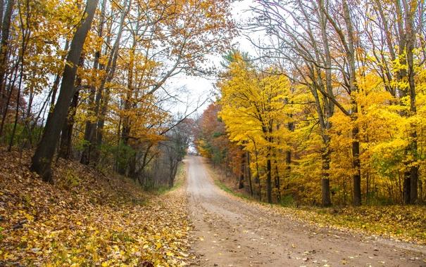 Фото обои дорога, осень, лес, деревья