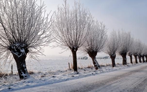 Фото обои зима, дорога, деревья, пейзаж