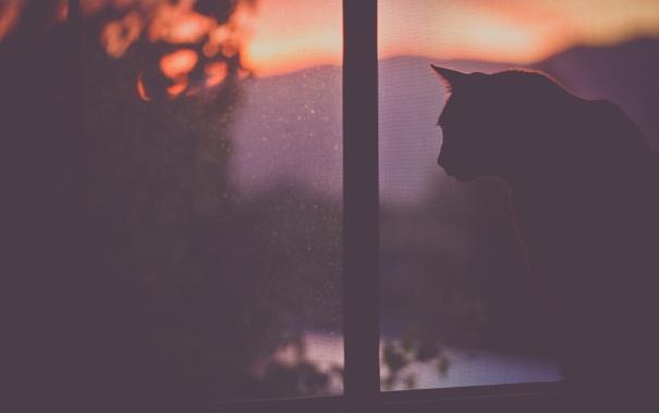 Фото обои кошка, кот, окно, сидит