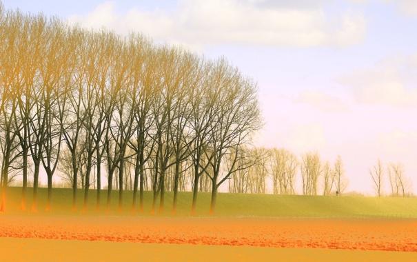 Фото обои поле, небо, деревья, дымка