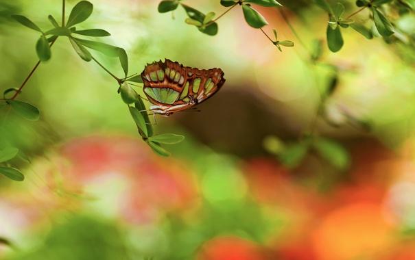 Фото обои блики, бабочка, листва, ветка