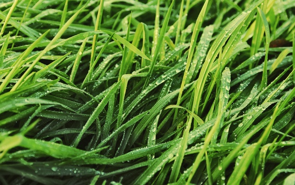 Фото обои зелень, трава, листья, капли, природа, роса, газон