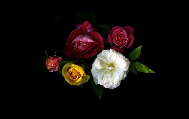 Фото обои листья, свет, фон, обои, розы, тень, букет