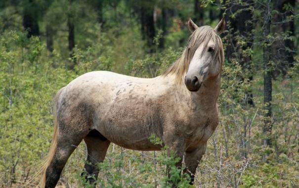 Фото обои лес, природа, конь