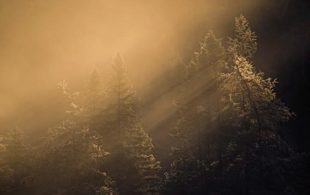 Фото обои лес, свет, утро