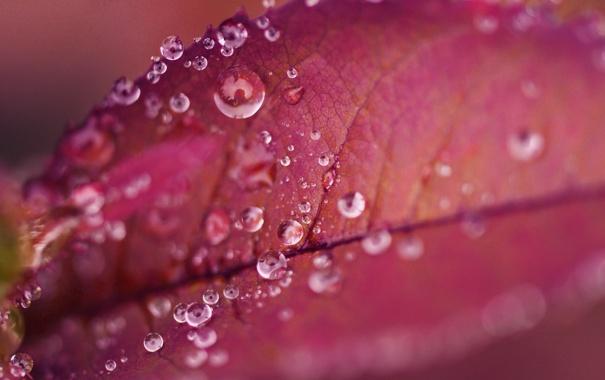 Фото обои капли, роса, вода, прожилки, лист, макро, красный