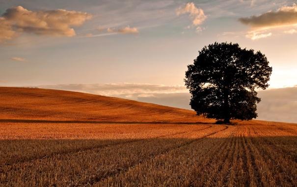 Фото обои поле, осень, небо, облака, фото, дерево