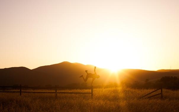 Фото обои поле, солнце, закат, человек