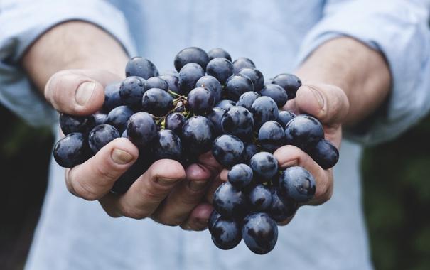 Фото обои красный, руки, урожай, виноград, кисть, сладкий, сочный