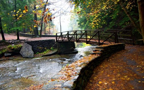 Фото обои осень, деревья, мост, парк, ручей