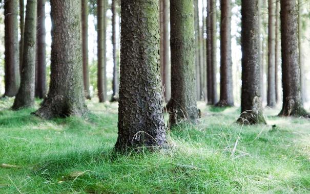 Фото обои деревья, природа, фото, дерево