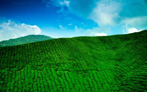 Фото обои небо, облака, горы, голубое, чайная, зелёная, плантация