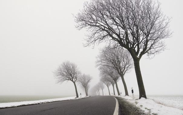Фото обои зима, дорога, деревья, туман