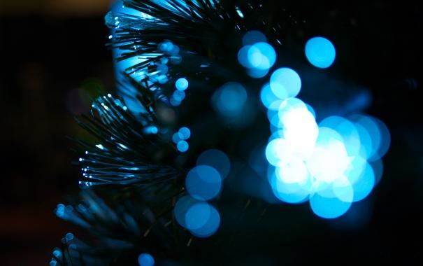 Фото обои макро, синее, боке