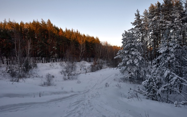 Фото обои зима, лес, снег, пейзаж