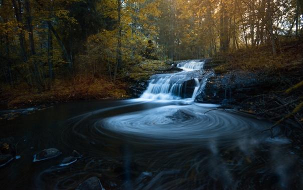 Фото обои осень, лес, листья, вода, солнце, деревья, каскад