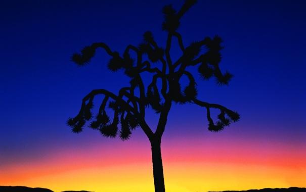 Фото обои закат, горизонт, небо, силуэт, ночь, вечер, дерево