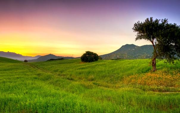 Фото обои трава, деревья, природа, дерево, пейзажи