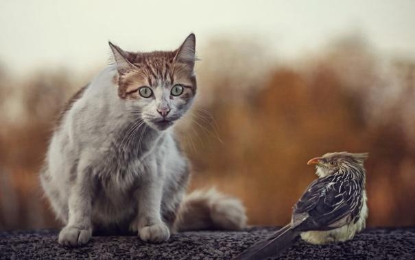 Фото обои кошка, природа, птица