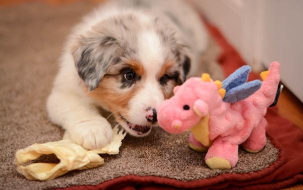 Фото обои игрушка, собака, щенок