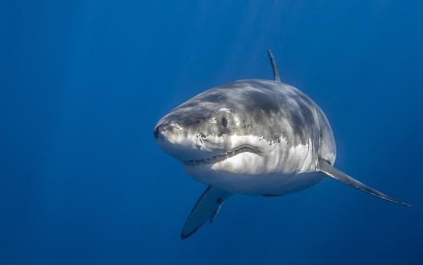 Картинки для детей акула