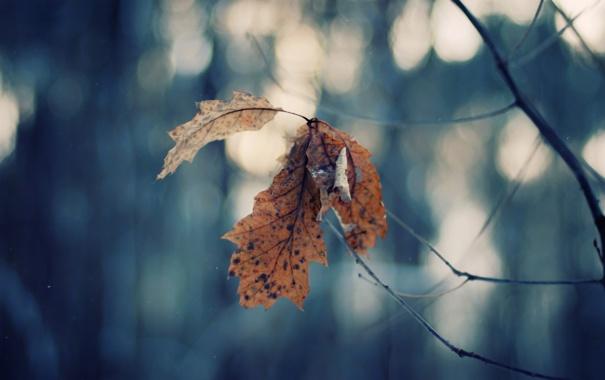 Фото обои ветки, лист, bokeh