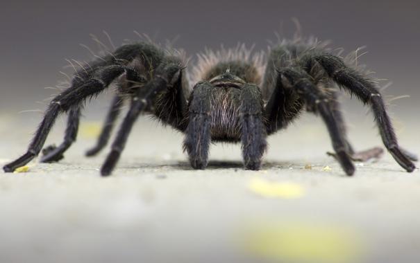 Фото обои макро, лапки, паук, насекомое
