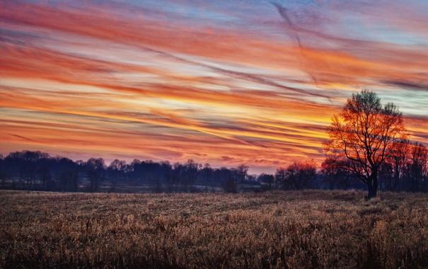 Фото обои поле, осень, лес, небо, деревья, закат, фото