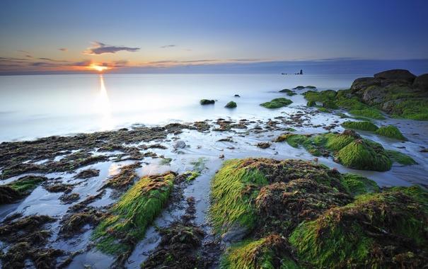 Фото обои море, водоросли, камни, побережье, дымка, франция