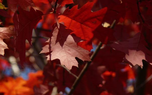 Фото обои осень, деревья, Рыжие листья