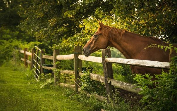 Фото обои лето, конь, забор