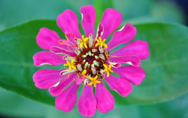 Фото обои листья, цветок, растение, лепестки, природа