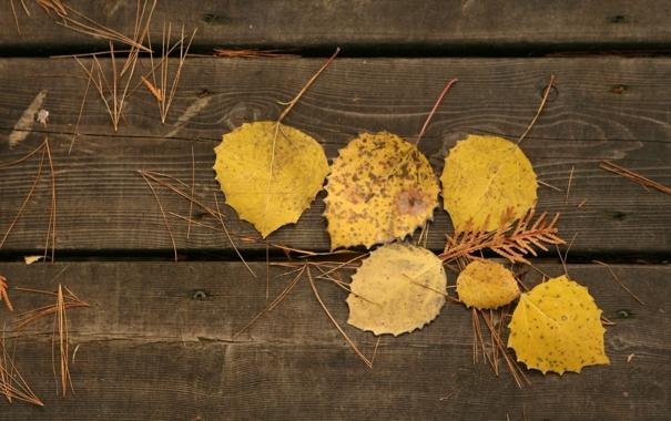 Фото обои листья, осень, фото, осенние обои, доски, макро, дерево