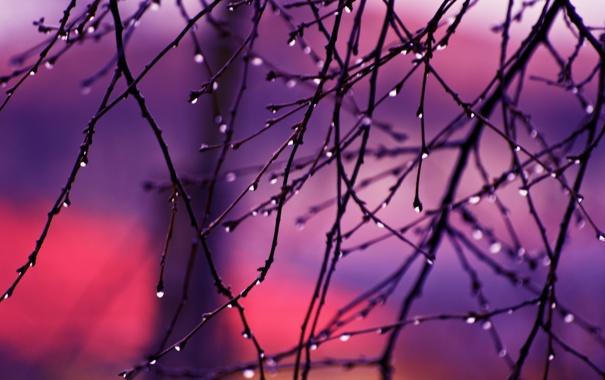 Фото обои капли, ветки, восход, autumn rain